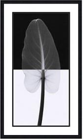 Amanti Art Calla Leaf I Framed Art Print by Steven N. Meyers